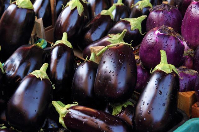 fresh Eggplant