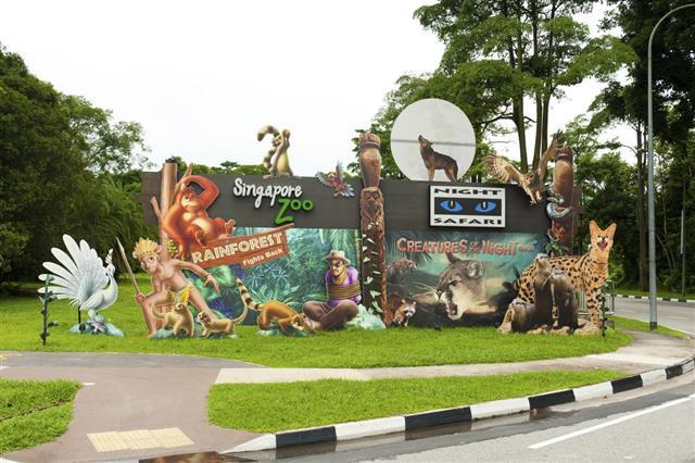 Singapore Zoo and Nigh Safari