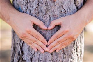 Hands making a heart shape on a tree
