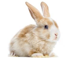 Dwarf rabbit in hutch