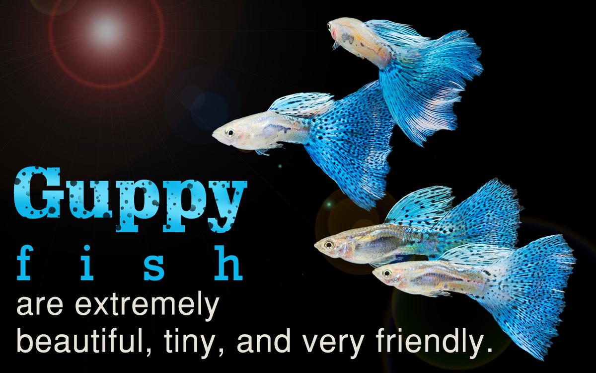 Non Aggressive Freshwater Fish