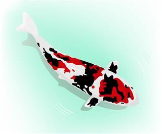Doitsu Koi fish
