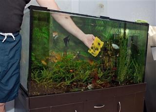 Cleaning The Aquarium