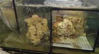 Hidden saltwater marine aquarium image, fish tank filter, live-rock