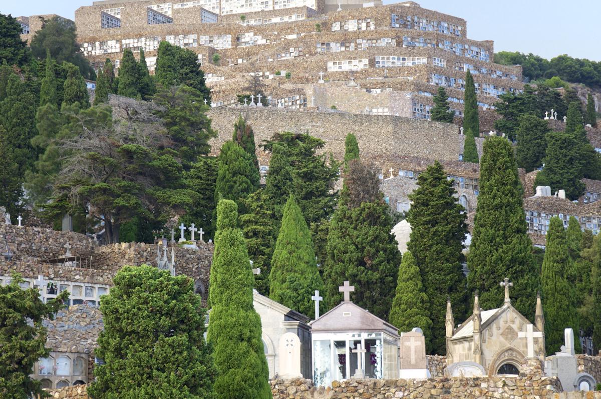 ornamental weeping evergreen trees