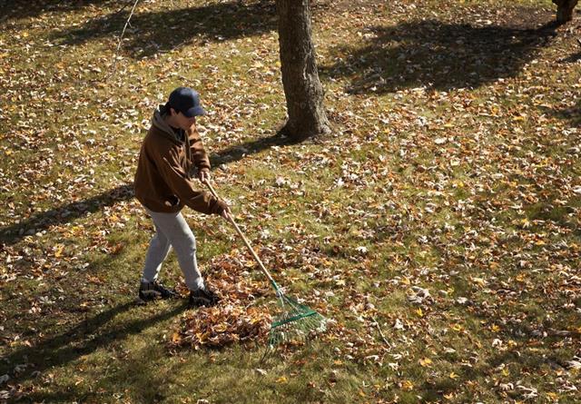 Man Raking Leaves