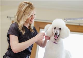 Professional Dog Groomer in Pet Salon