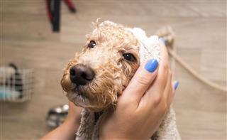 Getting a bath