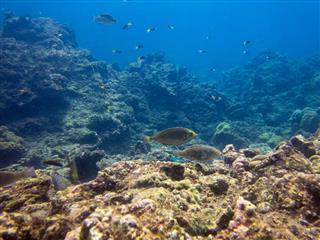 Coral Bleaching (phylum Cnidaria) Global Warming Phi Phi Tropical Fish