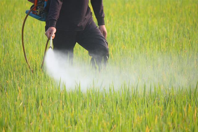 喷洒杀虫剂的农夫在米领域