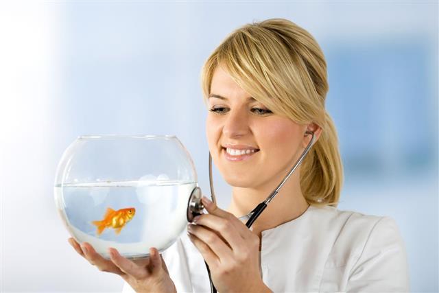 Vet, Fish Tank