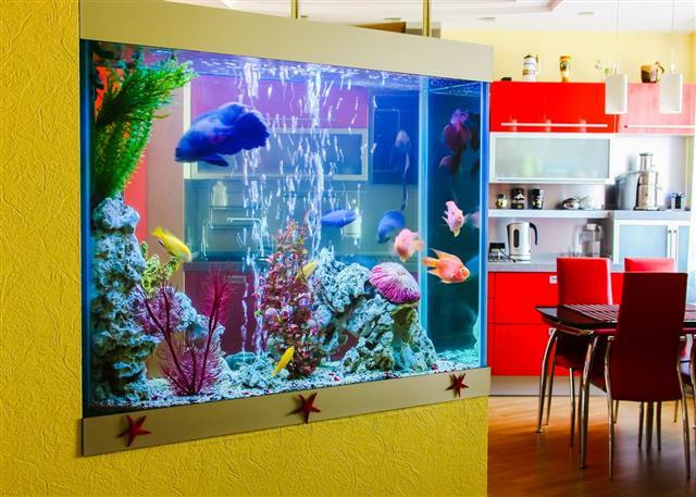 Beautiful aquarium with fish in a room