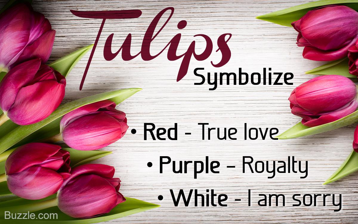 Life Cycle of Tulips