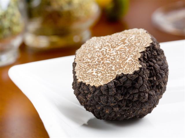 Mushroom Of Truffle