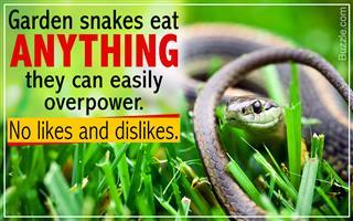 What Do Garden Snakes Eat?