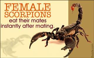 Emperor Scorpion Care - A Dangerous But Docile Pet