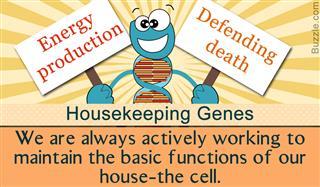 Importance of housekeeping genes