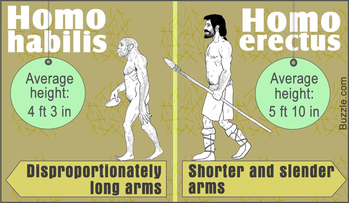 Homo habilis Vs. Homo erectus
