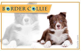 Wonderful Baby Blue Eye Chubby Adorable Dog - 320-604060-69712447  Photograph_547953  .jpg