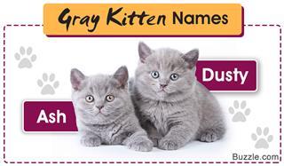 Names for gray kittens
