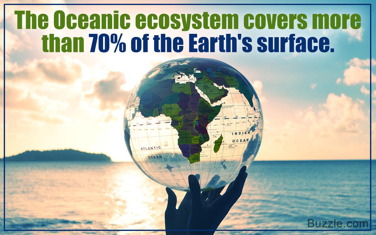 Understanding the Ocean Ecosystem