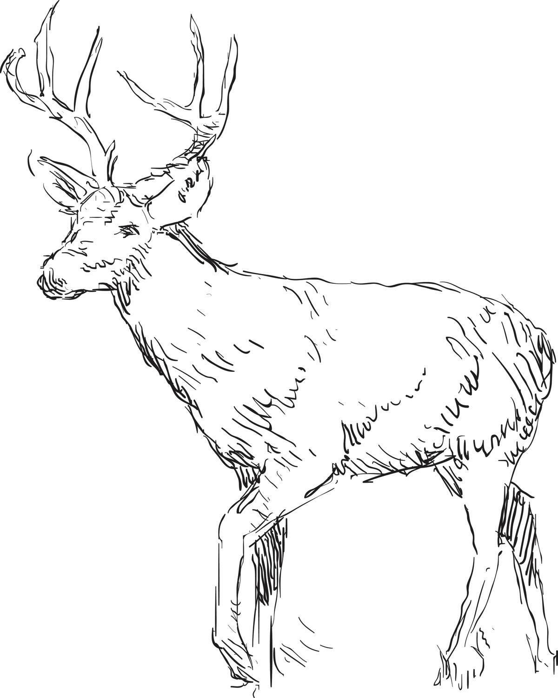 Deer spirit animal what does it symbolize deer sketch drawing buycottarizona Images