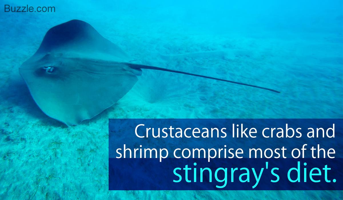 What Do Stingrays Eat?