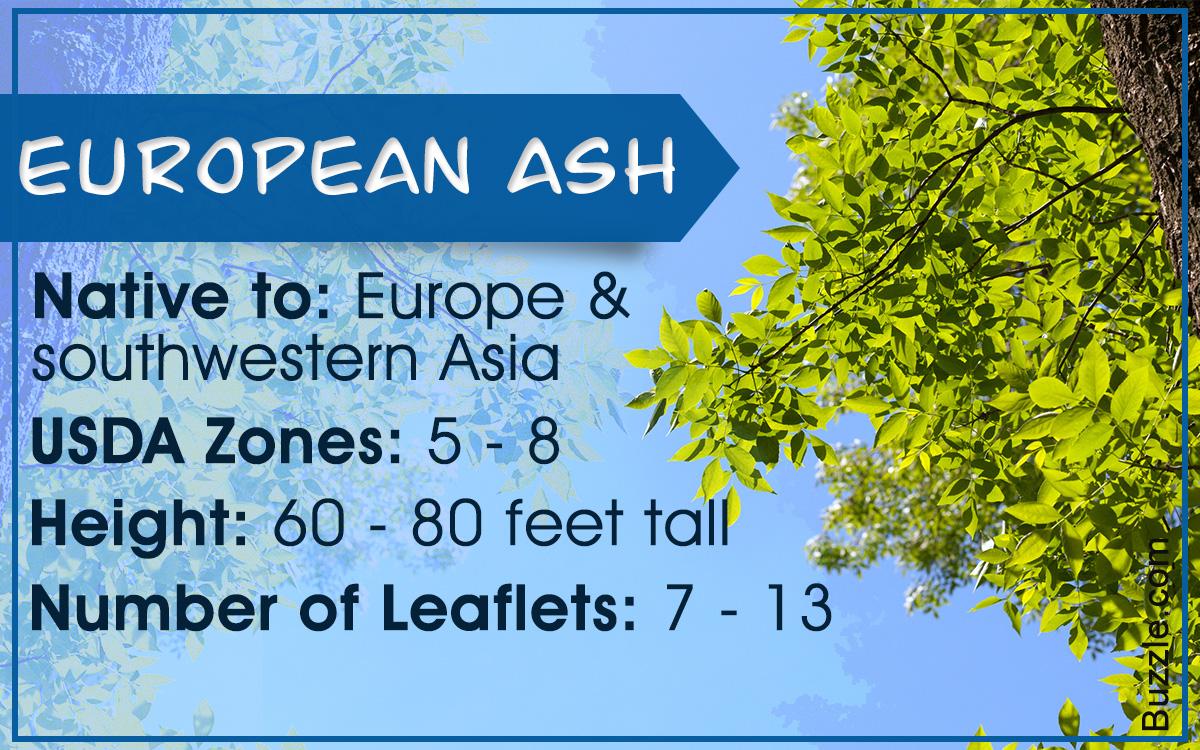 13 Varieties of Ash Trees