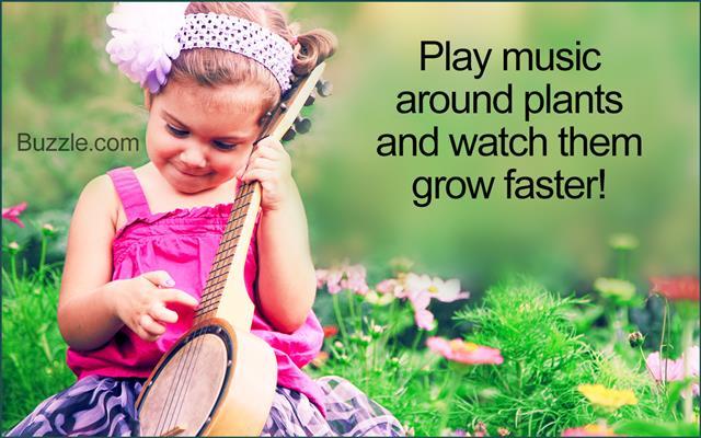 Adorable Little Girl Playing Vintage Ukelele Banjo in Flowers