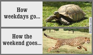 Cheetah at full stride,African Tortoise