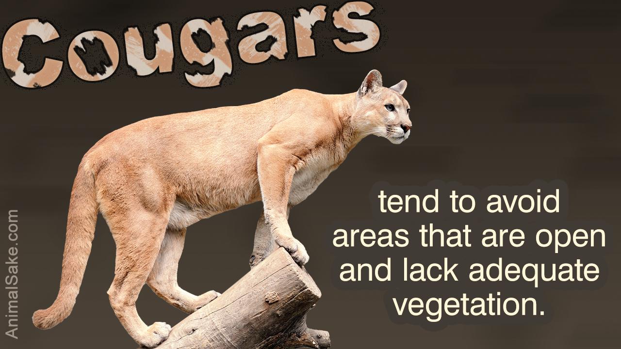 Cougar (Mountain Lion) Habitat