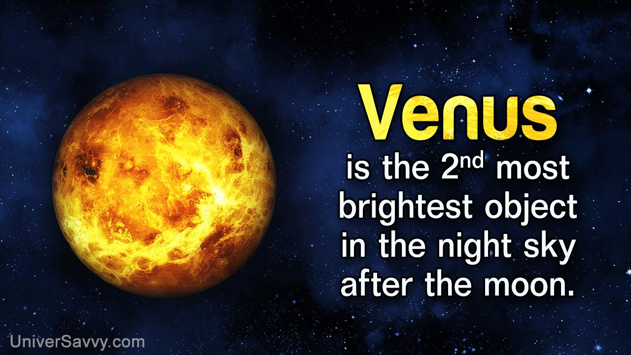 Venus - Beauty & the Beast