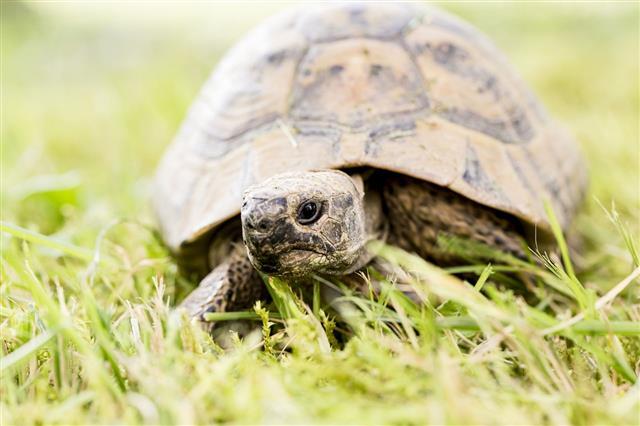 Turtle Walking In A Park