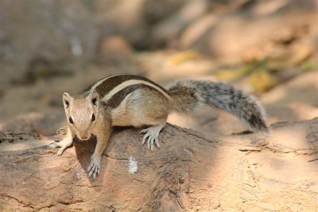 Squirrel In Deer Park