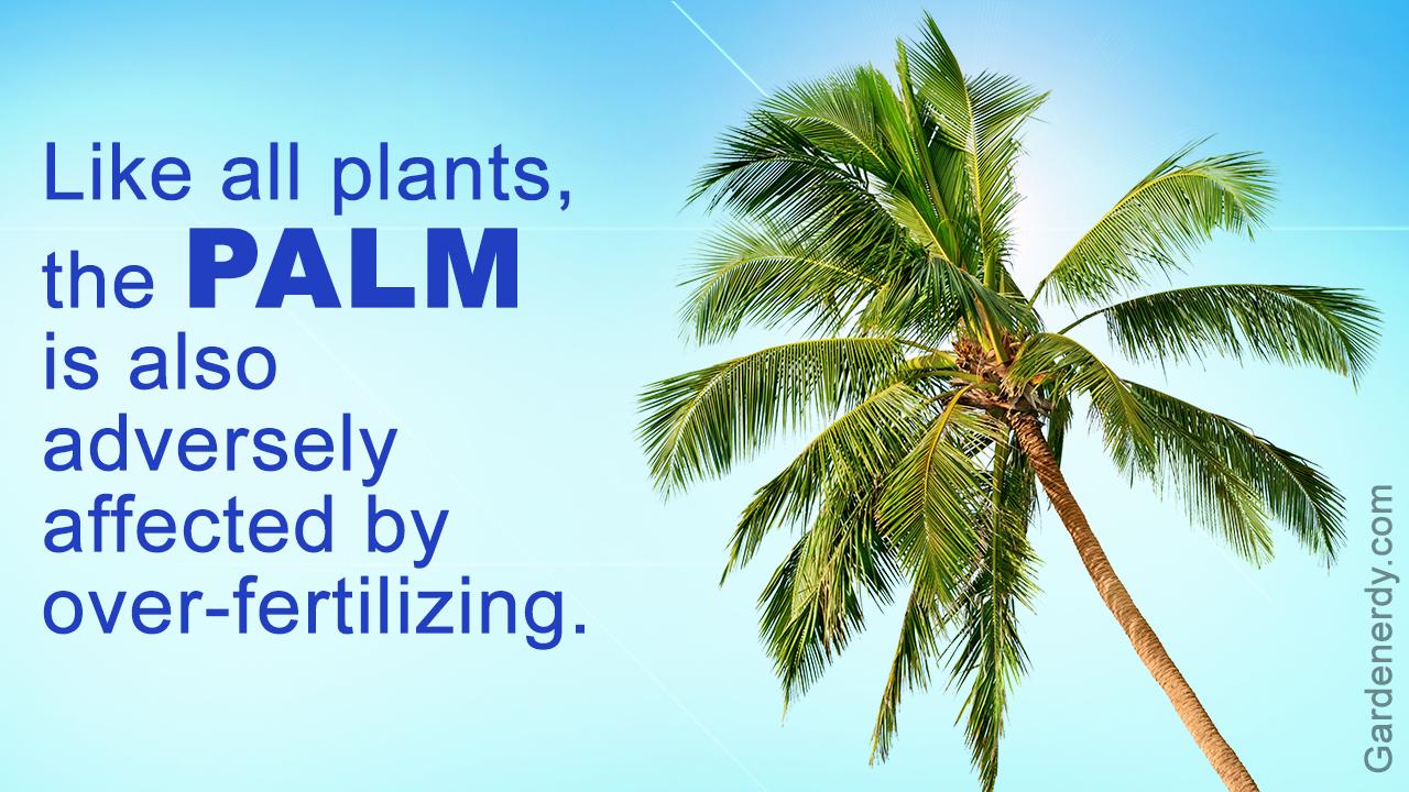 Homemade Palm Tree Fertilizer