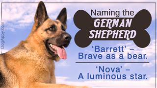 German shepherd name