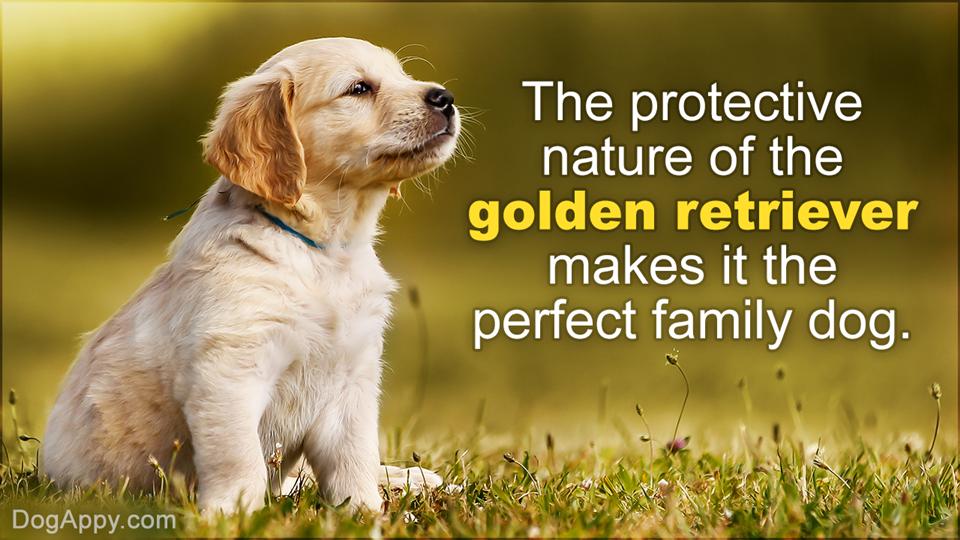Beagle dog traits