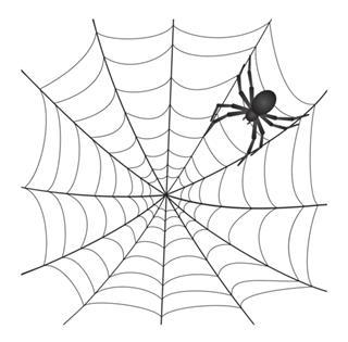 Spiderweb With Spider