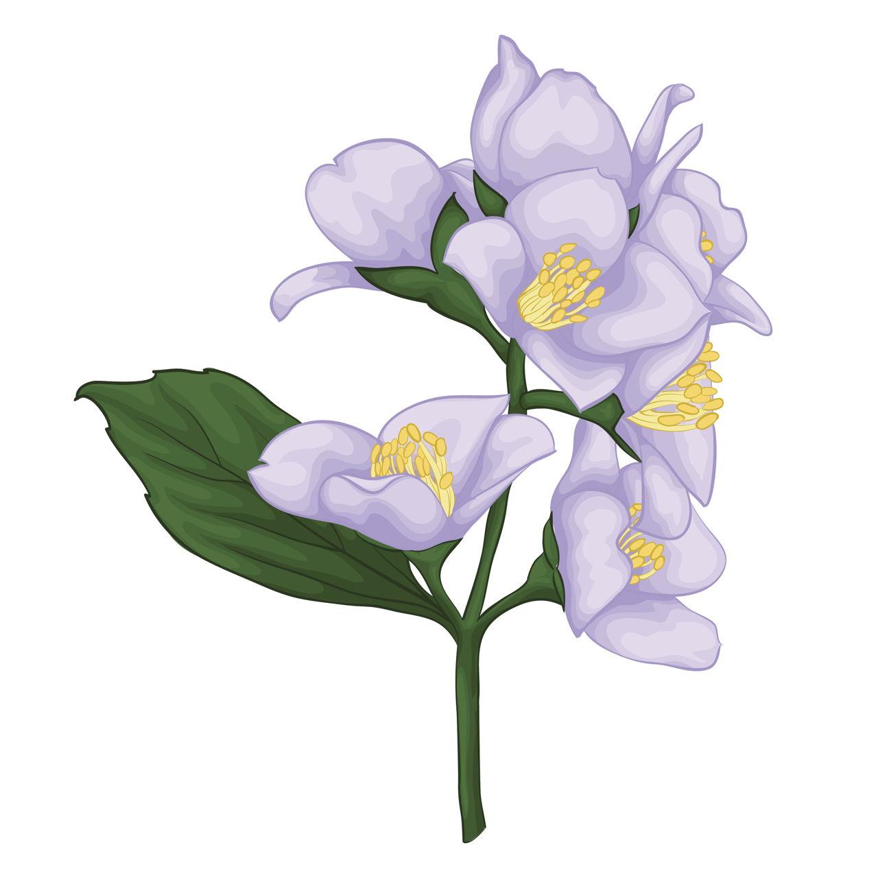 Jasmine flower tattoo beautiful jasmine branch izmirmasajfo