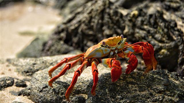 Class Crustacea Crab