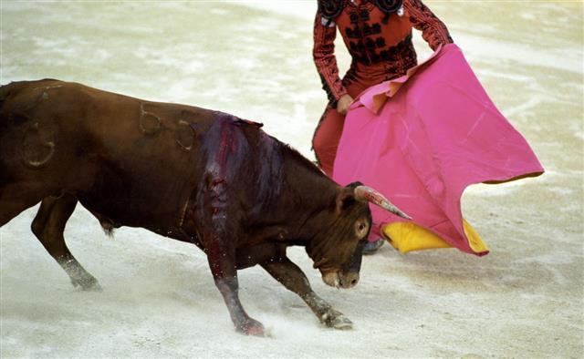 Bullfight action