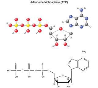 Adenosine triphosphate chemical formula