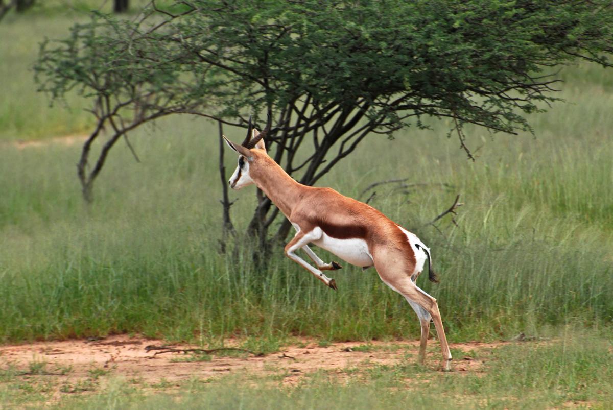 Types Of Antelope