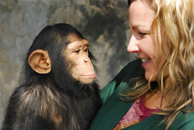 Baby Chimp and Handler
