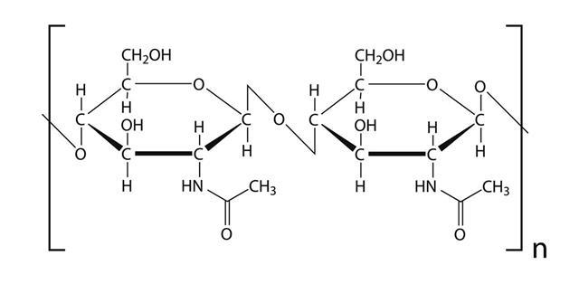 Chitin Molecule