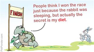 Rabbit and turtle meme