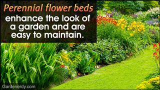 Perennial flower bed design