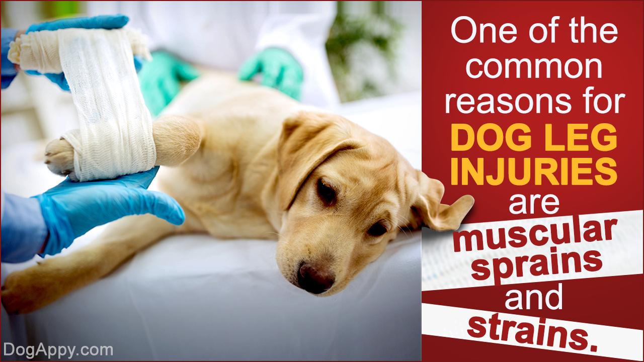 Dog Leg Injuries