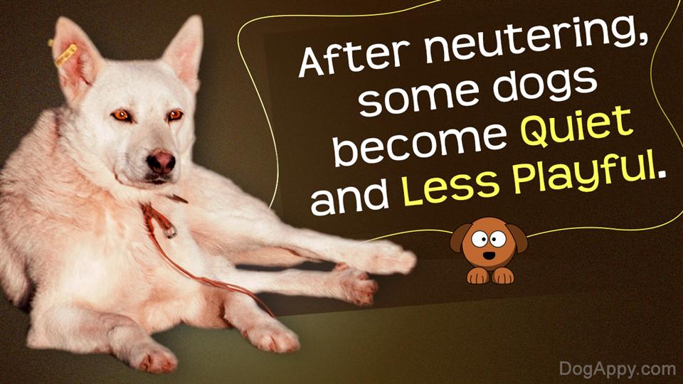 Dog behavior after neutering