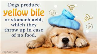 Elevated Alkaline Phosphatase In Dogs